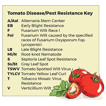 Mortgage Lifter Tomato