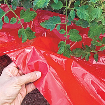 Turbo-Tomato! Tomato Weed Barrier & Mulch
