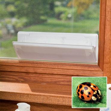 Asian Lady Beetle Trap Window Refills