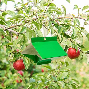 Apple Pest Trap - Control Moths & Oriental Fruit Moths