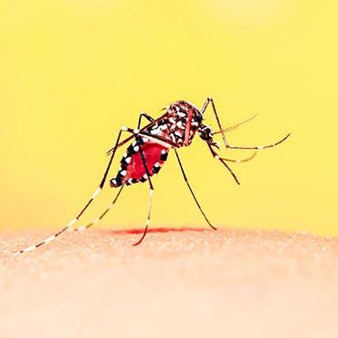 No-Squito!<sup>™</sup> Granules