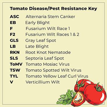 Gardeners Choice Hybrid Tomato