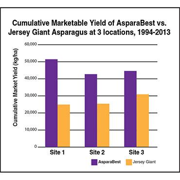 AsparaBest<sup>®</sup> Asparagus