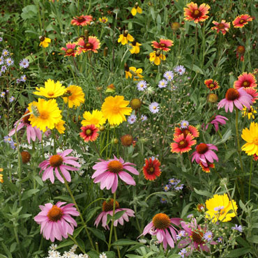 Honey Bee Flower Mixture
