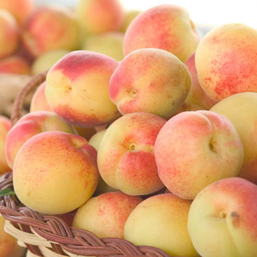 Sugar Pearls™ Apricot Tree