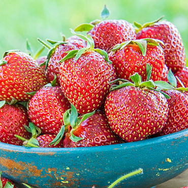 Sparkle Supreme Junebearing Strawberry