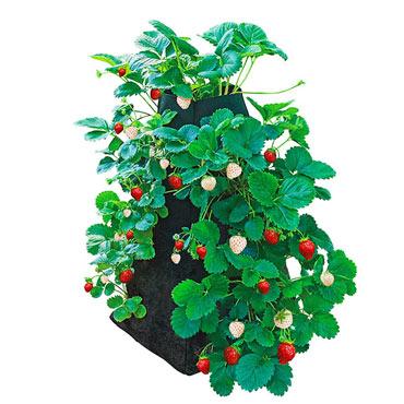 Grow Tub<sup>®</sup> Strawberry Tower<sup>™</sup>