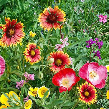 Southwest Wildflower Mix