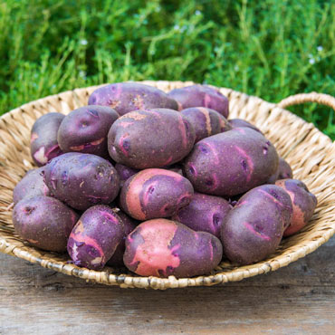 Purple Viking Potato