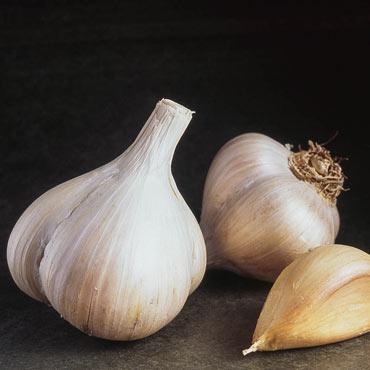 German Red Hardneck Garlic