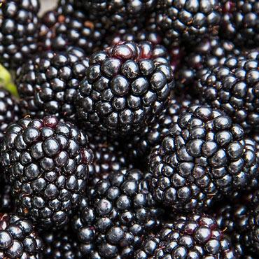 Black Magic<sup>™</sup> Blackberry