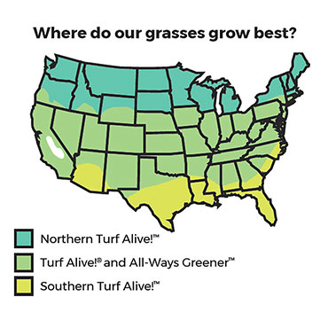 Southern Turf Alive!<sup>™</sup> Grass Seed Mixture