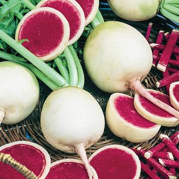 Radish Watermelon Pkt