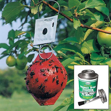 Economy Red Sphere Traps - Apple Maggot Fly Trap