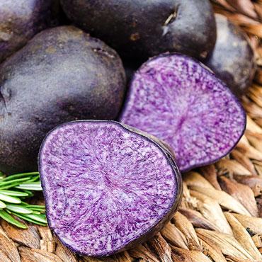 Purple Majesty Potato