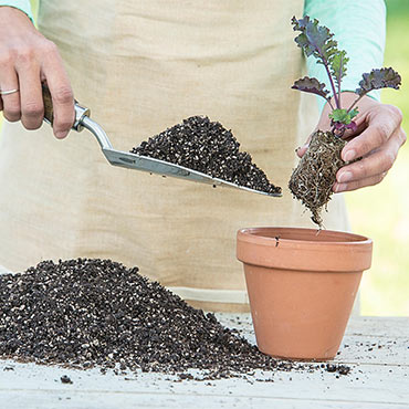 Perfect Start<sup>™</sup> Natural Potting Soil