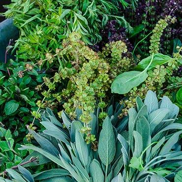 Herbs Alive!<sup>™</sup>
