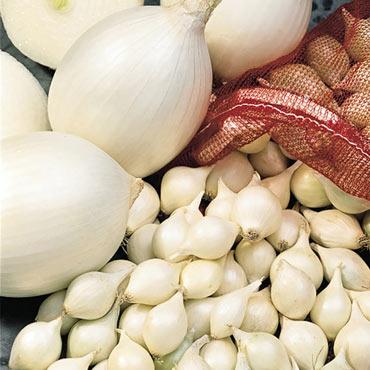White Onion Set