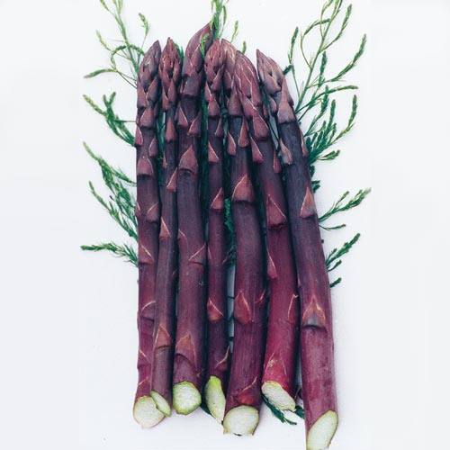 Purple Passion Asparagus