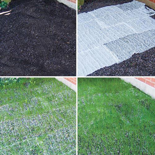 Grass Seed Matting By Turf Alive Iii With Rhizomes Lawn Mat