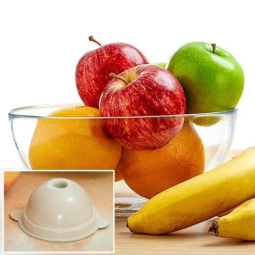 fruit flies trap fruit names