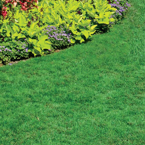 WOW!® Supreme™  Pre-Emergent Weed Control & Lawn Fertilizer