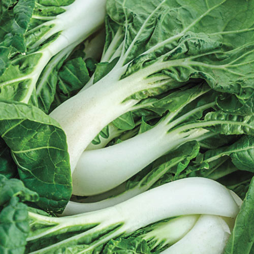 Organic Baby Choy Cabbage