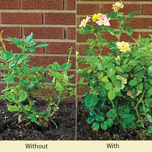 Roses Alive!™ 100% All-Natural Fertilizer