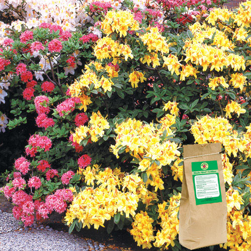 Shrubs Alive!™ Fertilizer for Acid-Loving Plants