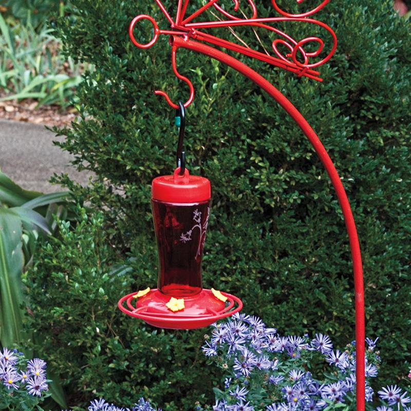 humming patio facebook a shared garden feeder media photos ever id post best hummingbird bird