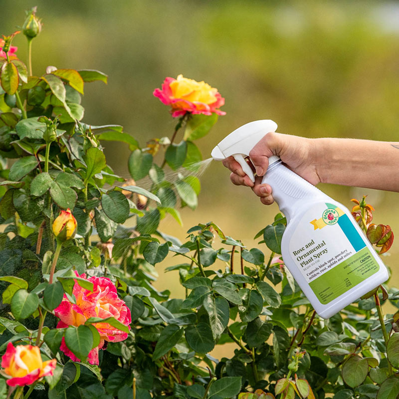 Rose And Ornamental Plant Spray Gardens Alive