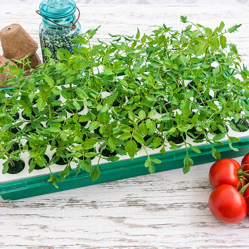 Indoors Garden Seed starting which plants should you start indoors you bet your helpful products from gardens alive workwithnaturefo