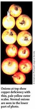 Copper Deficiency in Onions