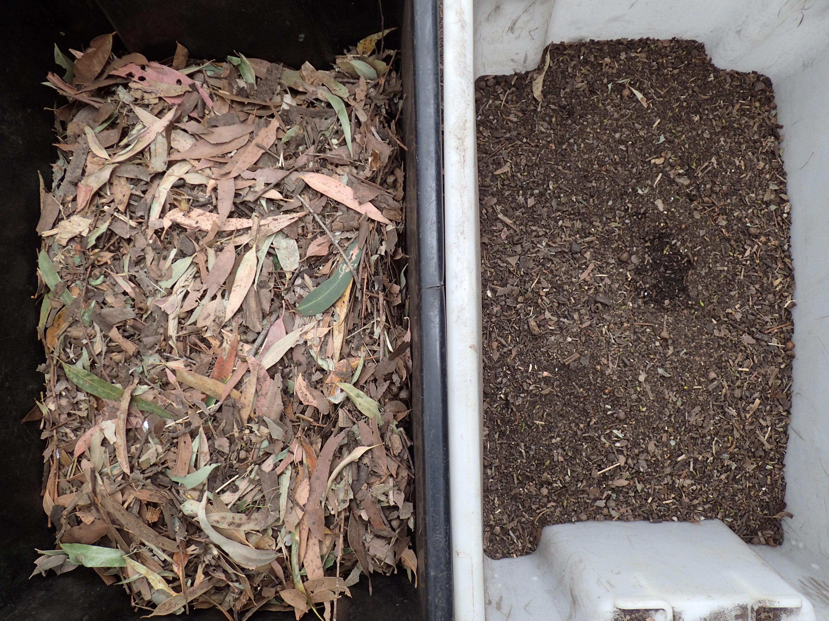 Eucalyptuscompost1