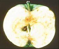 Apple Maggot Solutions
