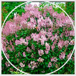 Habitats & Pollinators