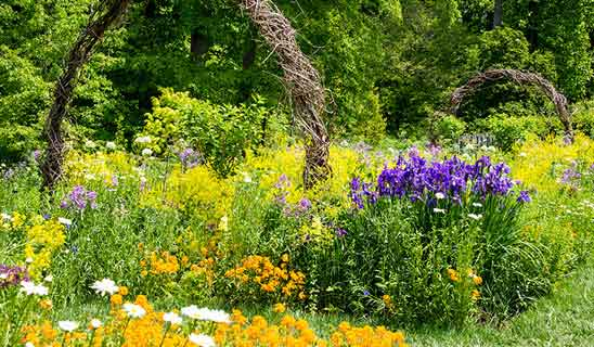 Perennials, Bulbs & Flowers