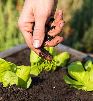 Soil & Amendments