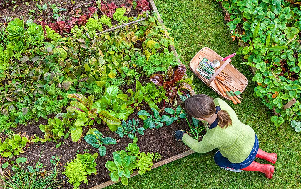 Stay Green Garden Club