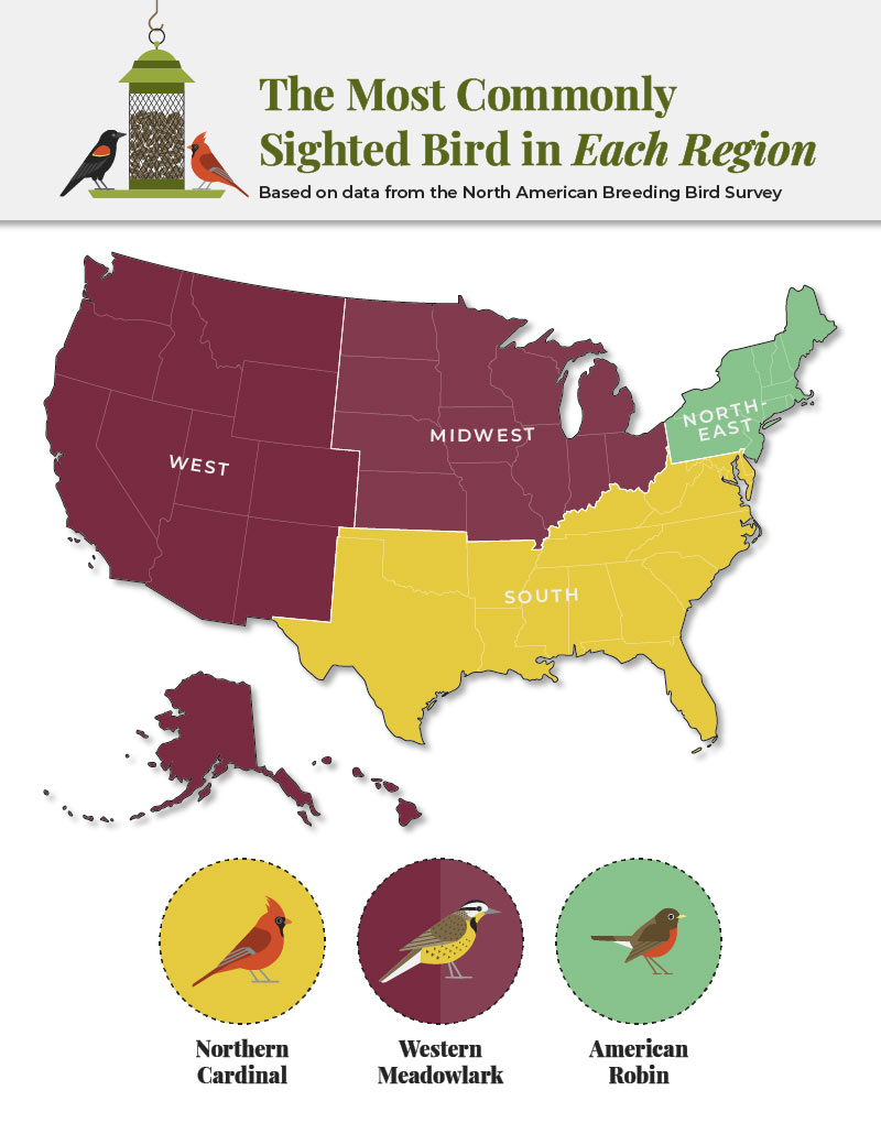 Most commonly sighted birds in each region of the U.S