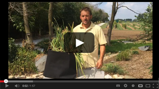 Growing Onions in Grow Tubs