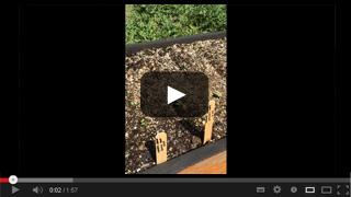 Radish and Carrot Planting