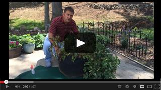 Grow Potatoes in Grow Bags