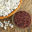 Mauveless Hybrid Popcorn Seed