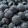 Sweet Repeat™ Black Raspberry Plant