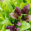 Gurney's<sup>®</sup> Superfood Salad Seed Blend