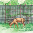 Deer Stop Garden Netting