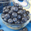 Patriot Northern Highbush Blueberry Plant