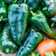 Masivo Hybrid Hot Pepper