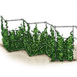 Pea Fence - Plant Trellis
